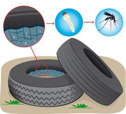 VWS pakt muggenimport via banden aan